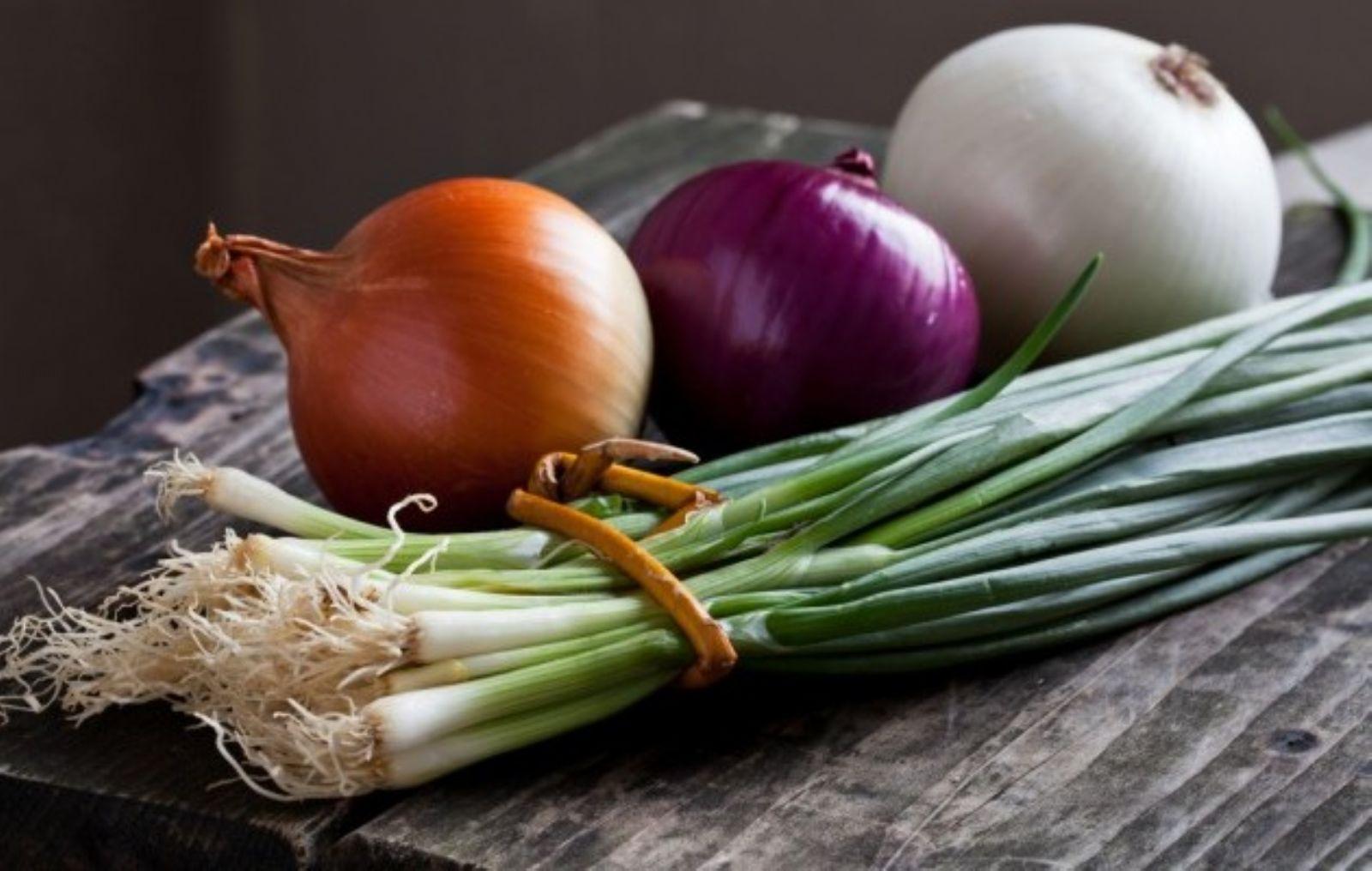الفرق بين انواع البصل واستخداماته أصداء